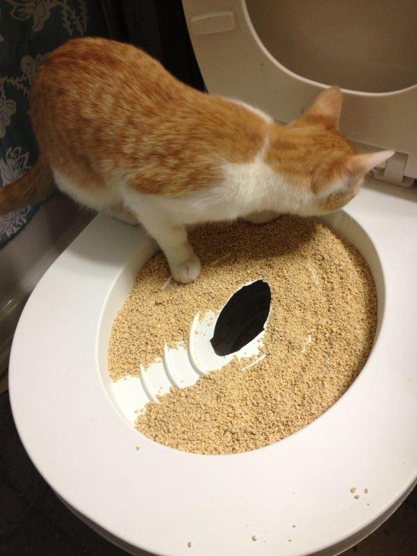 Záchodové prkénko pro Vaši kočku CitiKitty Cat Toilet