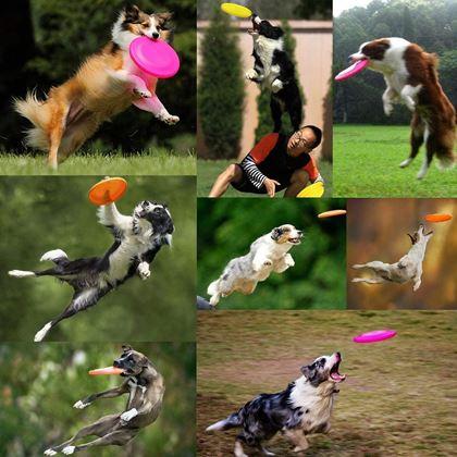 Létající frisbee