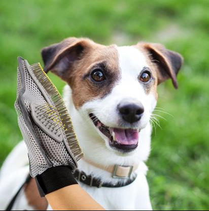 Kartáč na psy