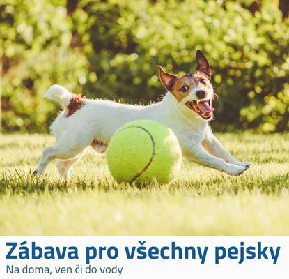 Velký tenisák pro psy