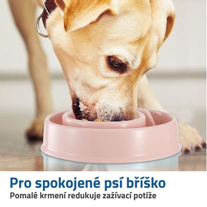 misky pro psy